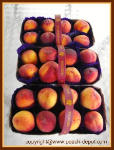 Picture of Baskets of Fresh Picked Peaches