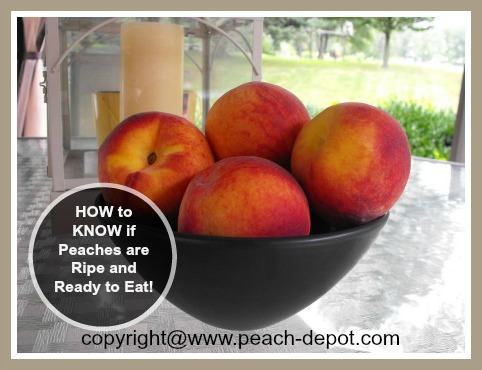 How to Know if Peaches are Ripe and Ready to Eat
