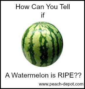 How to Tell if a Watermelon is Ripe