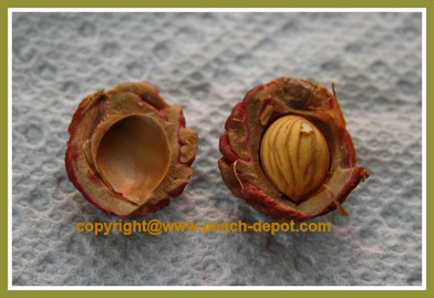 Picture of a Peach Seed