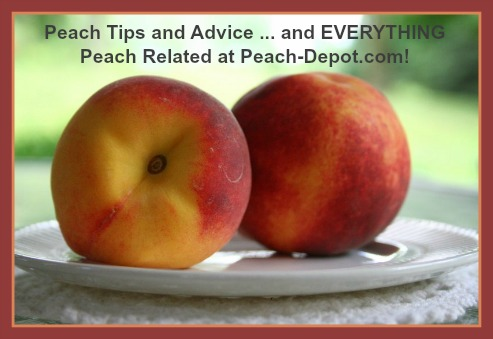 Peach Tips and Advice from Peach-Depot.comv